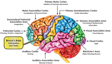 Broca-Brain-Map