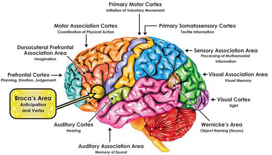 Broca-Brain-Map