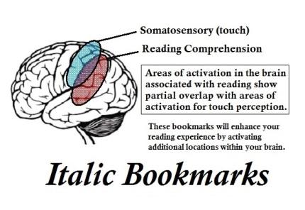brain diagram revised
